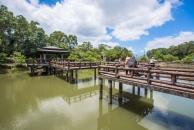 羅山大魚池