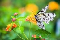 在每年3月至8月是蝴蝶谷絕佳的賞蝶季節